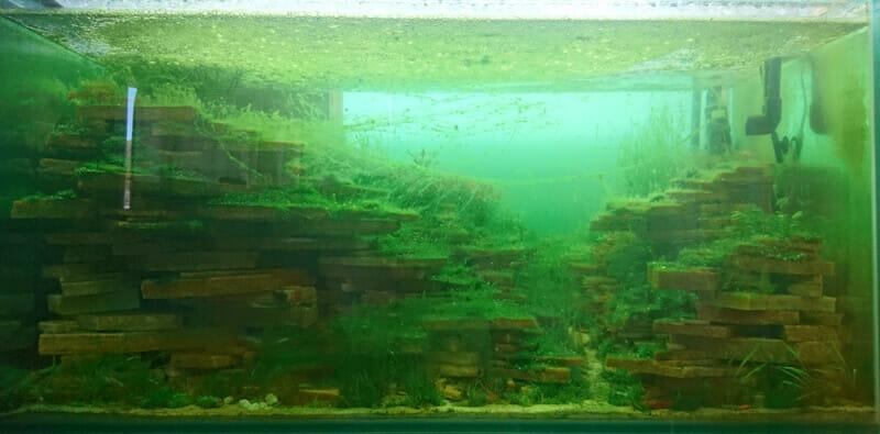 大量の藻類