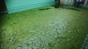 algae more