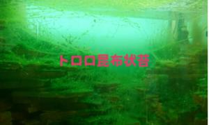 トロロ昆布苔