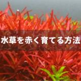 水草を赤く育てる方法