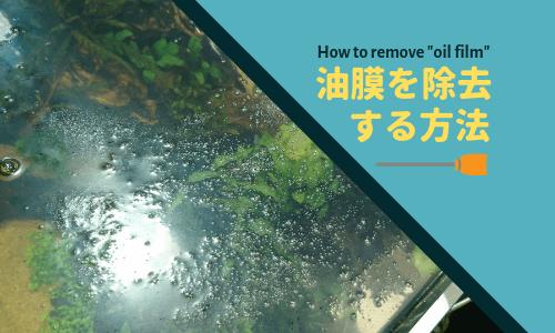 【水草水槽】油膜対策を詳しく解説 ー3つの方法をご紹介ー【海水水槽】
