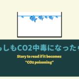 【CO2過多】お魚やエビがCO2中毒になった時の対処法