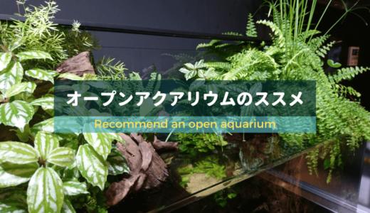 【苔予防に効果大!】オープンアクアリウムのススメ ー美しい水辺を作ろうー