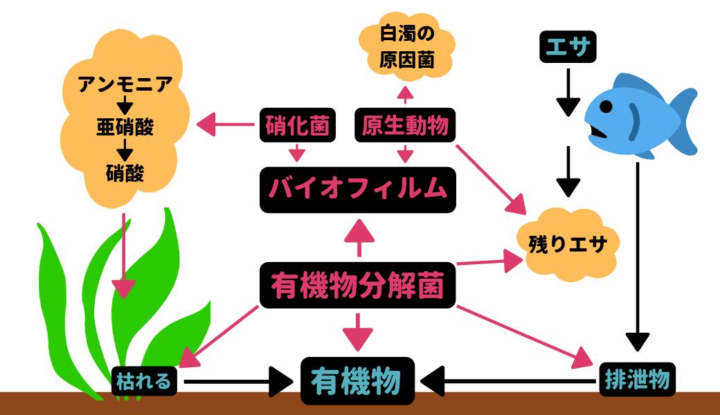 生物ろ過概略図