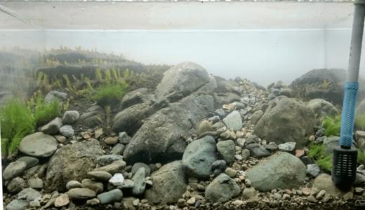 Planting aquatic plants