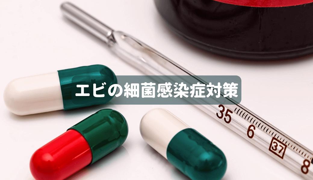 エビの細菌感染症対策