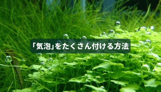 【光合成促進】水草に酸素の気泡をたくさん付ける方法