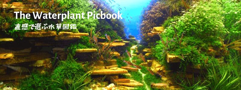 直感で選ぶ水草図鑑