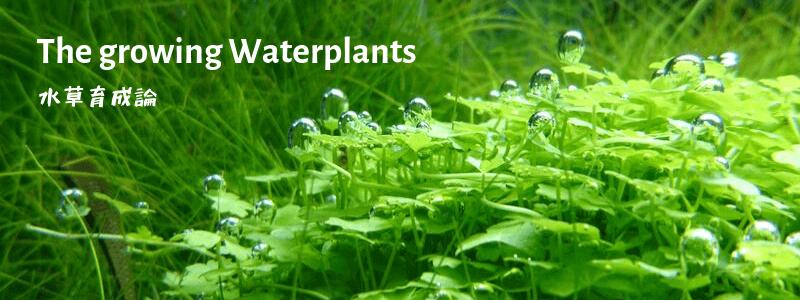 水草育成論
