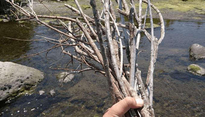 細い流木②