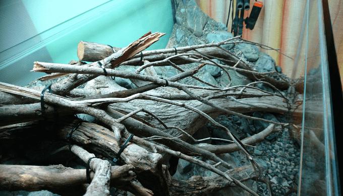 流木を固定②