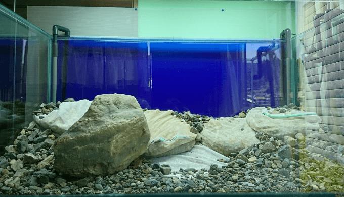 大きい川石を入れる