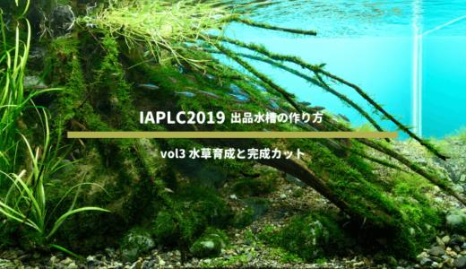 【IAPLC2019】世界水草レイアウトコンテスト 出品水槽の作り方 vol3 水草育成と完成カット
