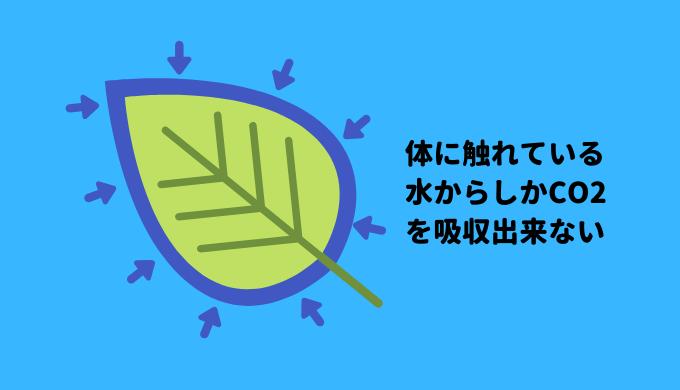 水草が光合成に利用できるCO2は体の周りにあるものだけ