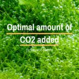 Optimal amount of CO2 added to aquatic plants