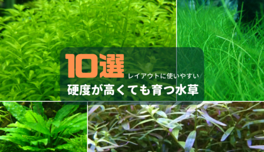 【石組レイアウトにおすすめ】硬度が高くても育つ水草10選