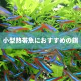 小型熱帯魚におすすめの餌