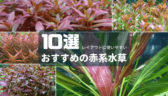 おすすめの赤系水草