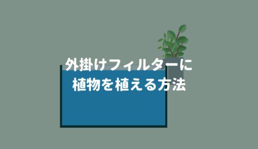 【水質浄化】外掛けフィルターに植物を植える方法 ー手軽にオープンアクアリウムを楽しむー
