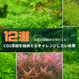 CO2添加を始めたらチャレンジしたい水草