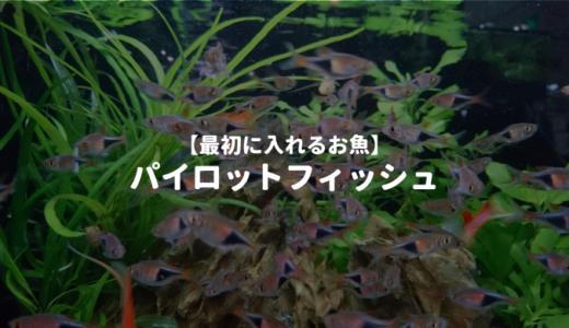 【最初に入れるお魚】パイロットフィッシュを詳しく解説 ーおすすめの熱帯魚5種をご紹介ー