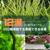 CO2無添加でも育成できる水草