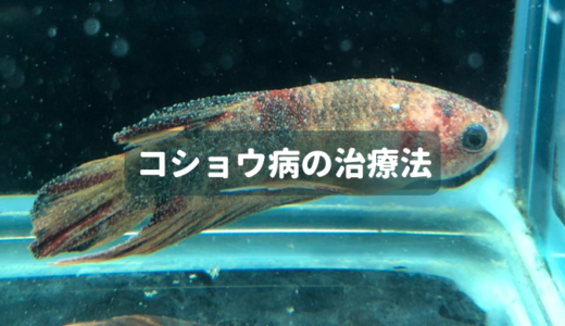 【お魚の病気】コショウ病の治療法 ー淡水魚の場合ー