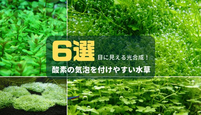 酸素の気泡を付けやすい水草