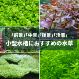 小型水槽におすすめの水草