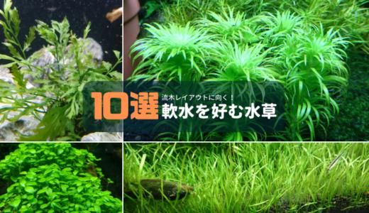 【流木レイアウトに向く】軟水を好む水草10選