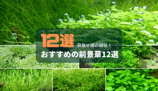 【水草の絨毯】おすすめの前景草12選
