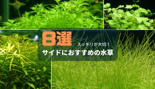 水槽のサイドにおすすめの水草8選