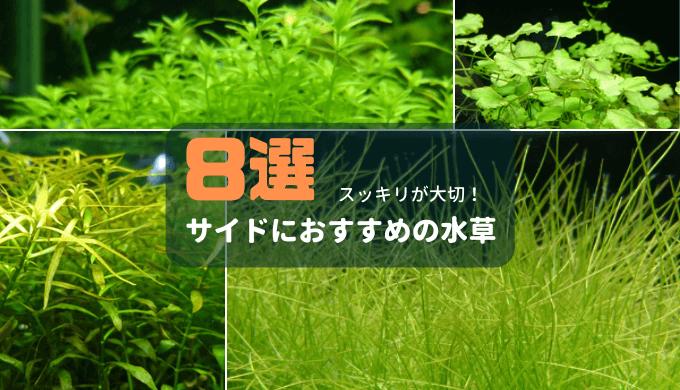 サイドにおすすめの水草