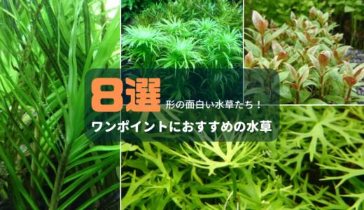 ワンポイントにおすすめの水草8選