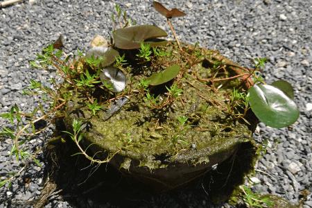 植木鉢を出す