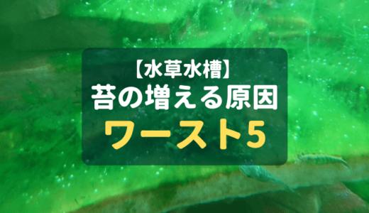 【水草水槽】苔の増える原因ワースト5 ー予防法も解説!ー