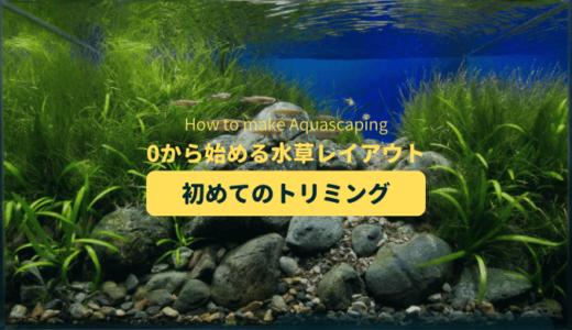 【水草レイアウト】初めての水草のトリミング