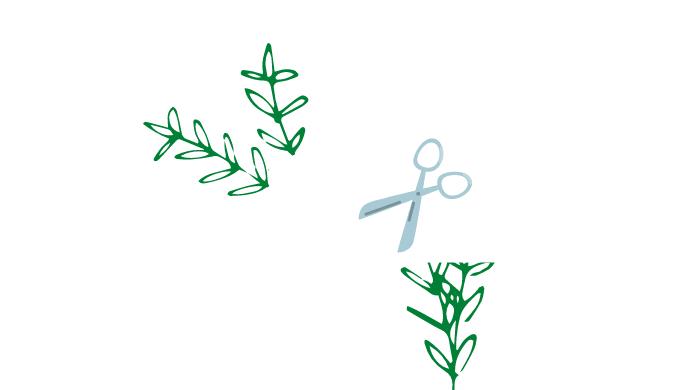有茎草をカット