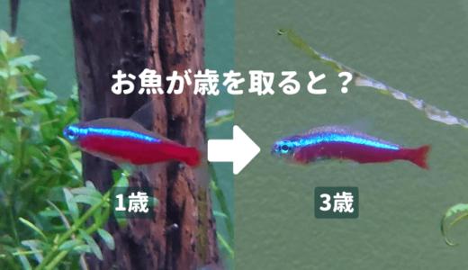 お魚が歳を取ると? ーお魚の寿命の目安、老化の症状、長生きさせるコツー