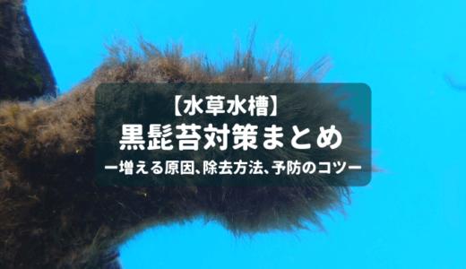 【水草水槽】黒髭苔対策まとめ ー増える原因、除去方法、予防のコツー