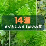 メダカにおすすめの水草