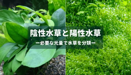 陰性水草と陽性水草 ー必要な光量で水草を分類ー