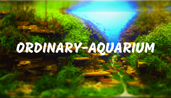 Ordinary-Aquarium